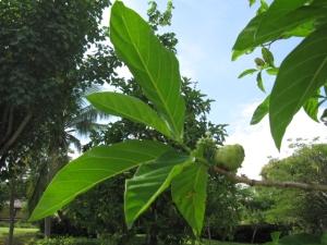 Bali 2010 708