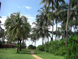 Sri Lanka Ranweli 025